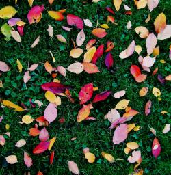 Canva - Fall Foliage (3)